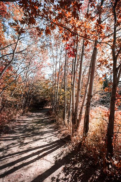AutumnWalks.jpg