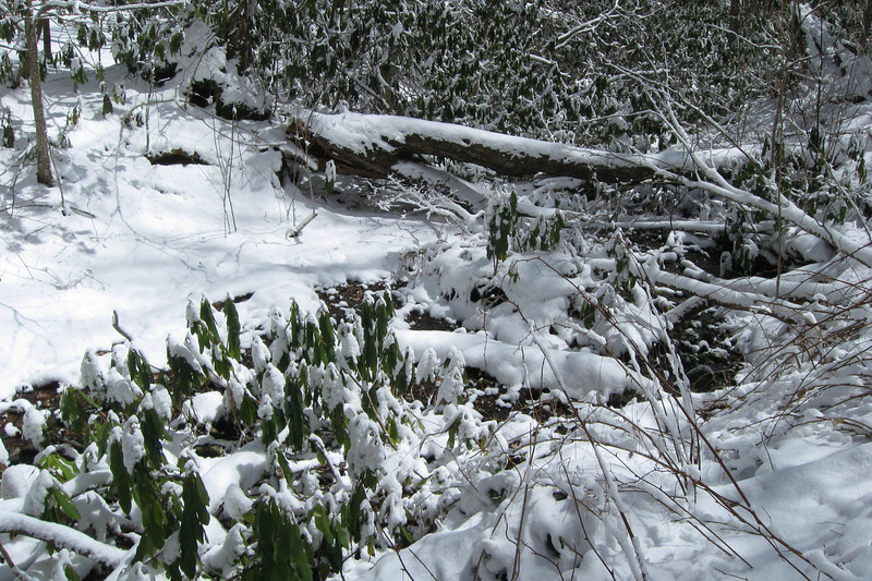 As the trail continues down off the ridge it crosses this small stream, which the snow wasn't heavy enough to cover...