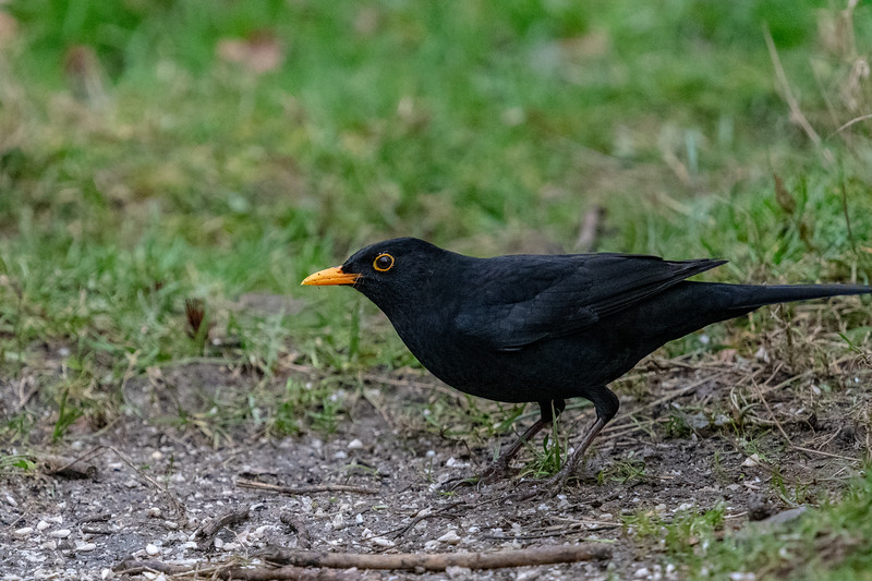 Blackbird-12.jpg