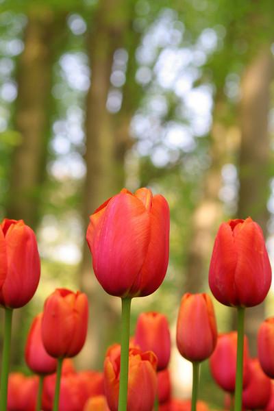 DUTCH FLOWERS, MACROS & MORE