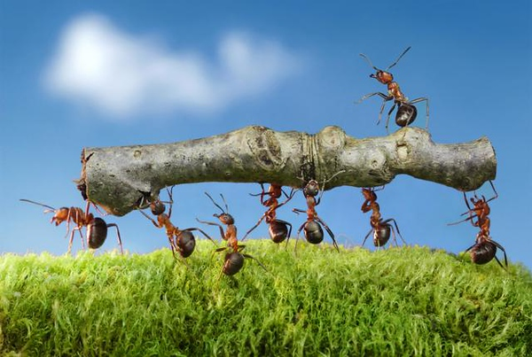 microservices-ants1.jpg
