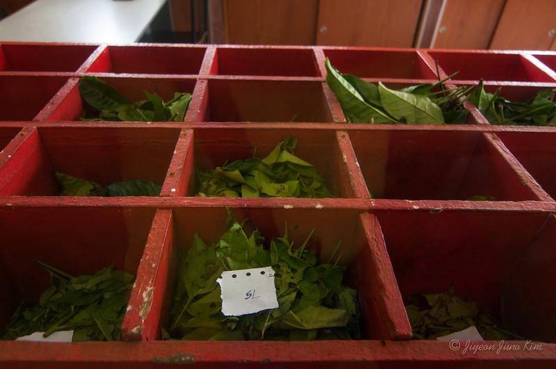 Tea factory - sorting