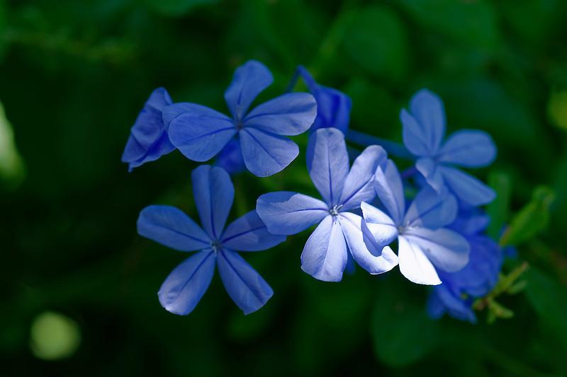 Mariner Pointe Flowers