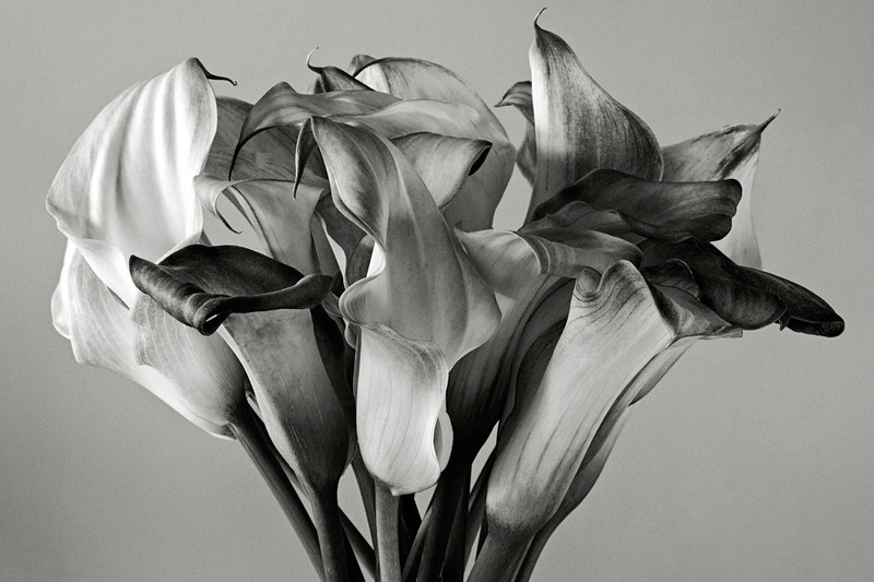 group-of-callas.jpg