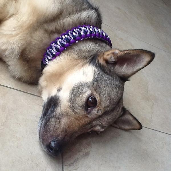 Ronja's paracord halsband