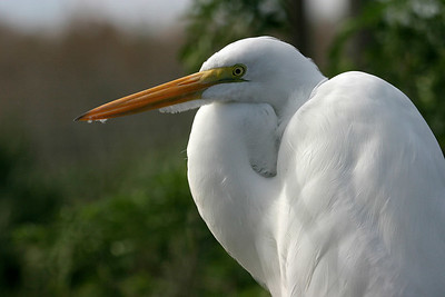 EOR Birds