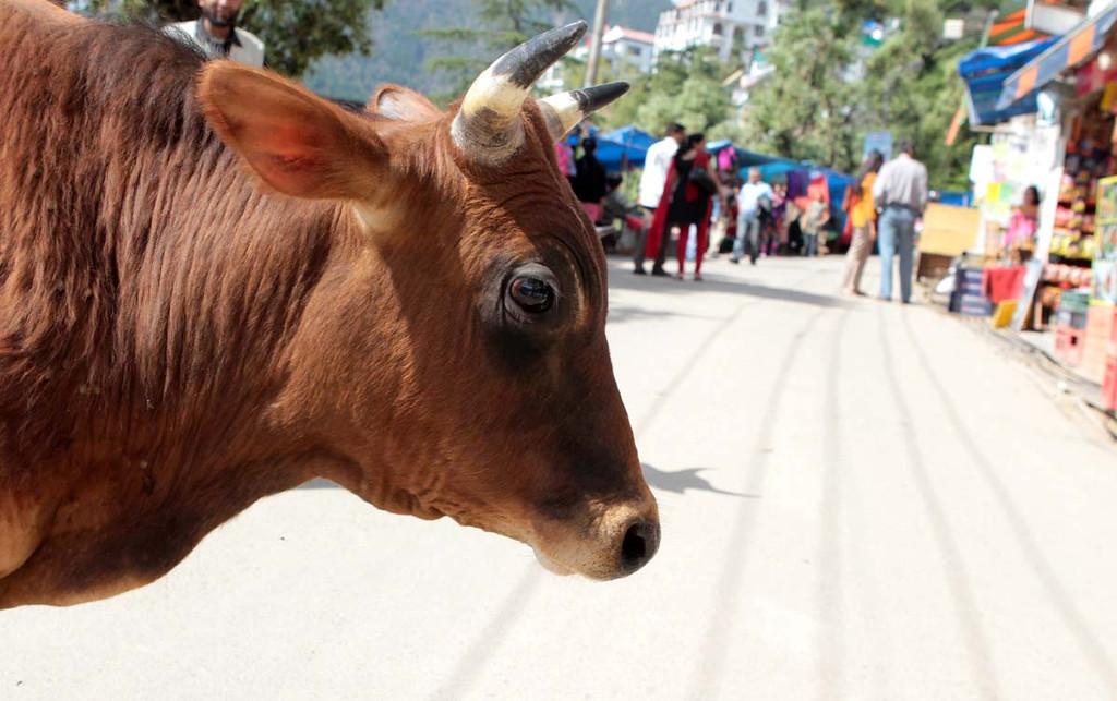 . Mcleod Ganj north of Dharamsala, India on April 3, 2013. Shmuel Thaler/Sentinel