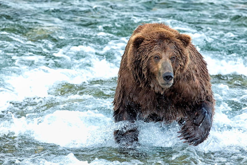 Alaska_2013_FH0T7813.jpg