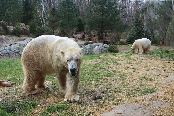 NC Zoo McL 032119