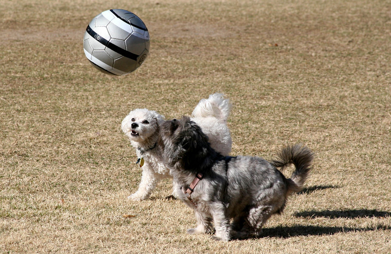 Max and Ruby play soccer2.jpg