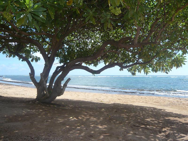 Kauai 018.JPG