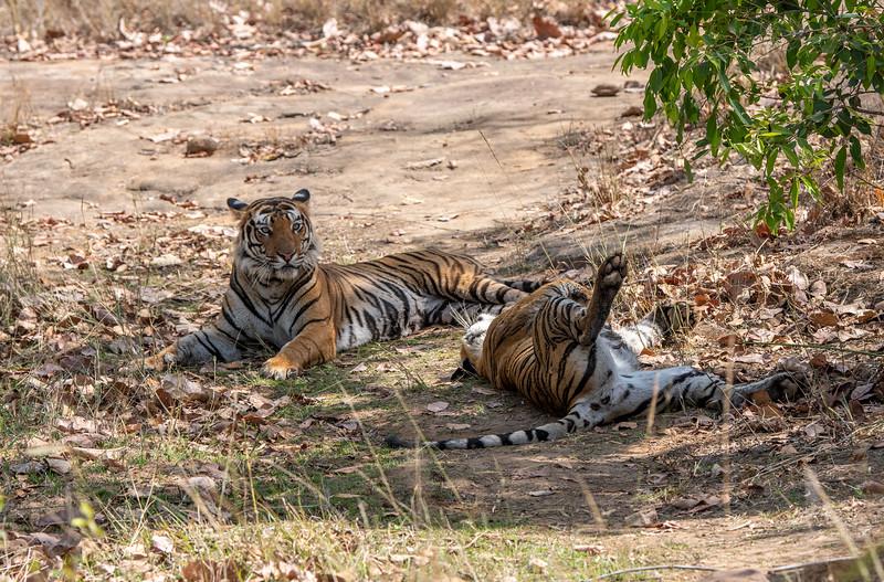 India_April_2019-1409.jpg