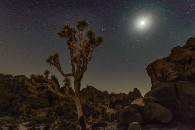 Joshua Tree NP 2017