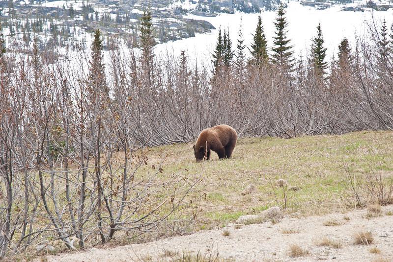One of the Yukon natives.