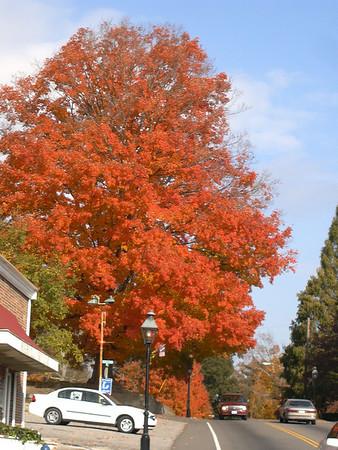 Fall Photos of Rogersville