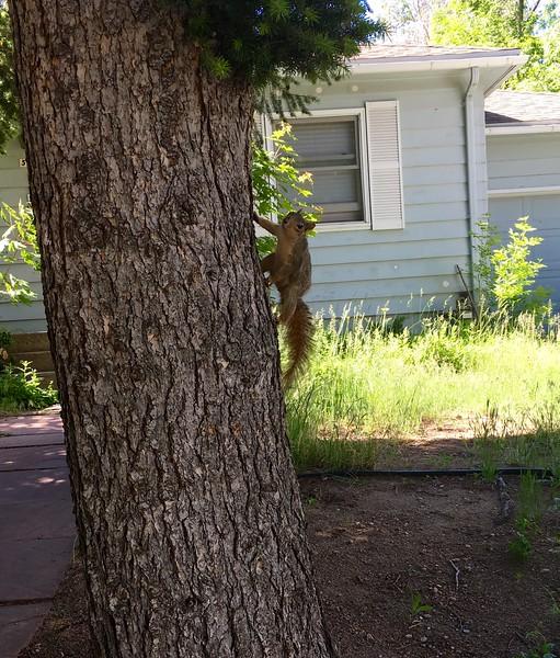 Squirrel?
