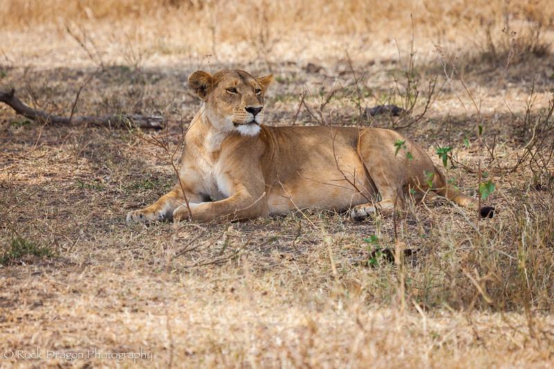 South_Serengeti-41.jpg