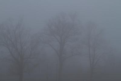 Foggy Shots