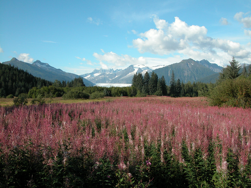 Alaska_20040050.jpg