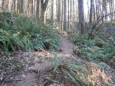 Bells Mountain Trail/Moulton Falls Park Hike