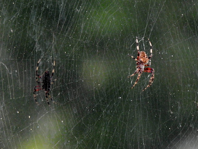 Bugs & Spiders