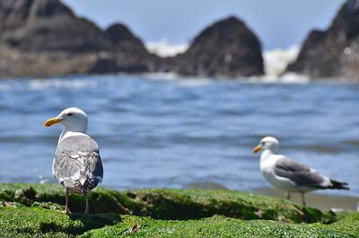 Oregon Coast June 2015