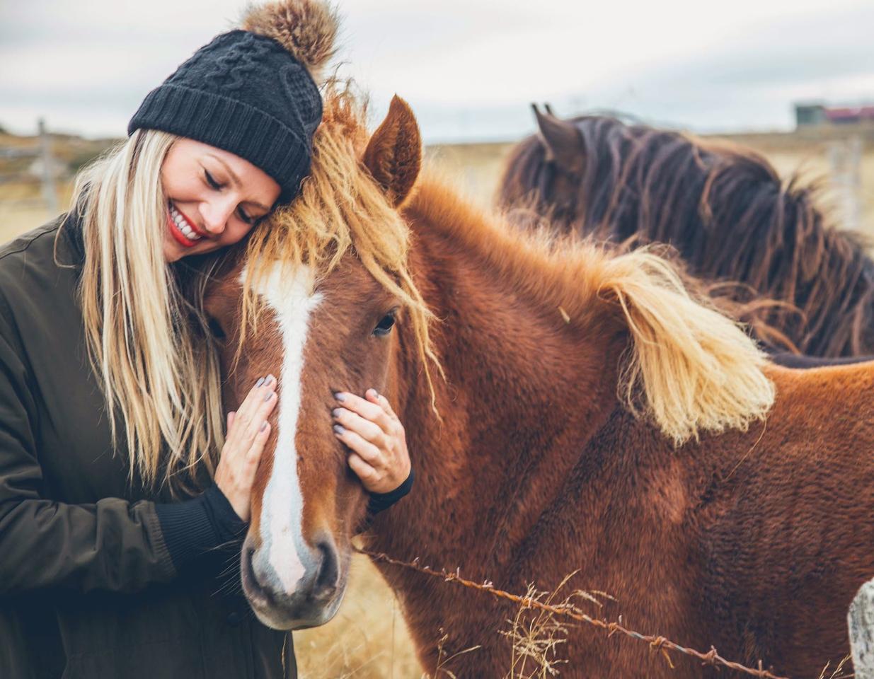 Iceland's Horses