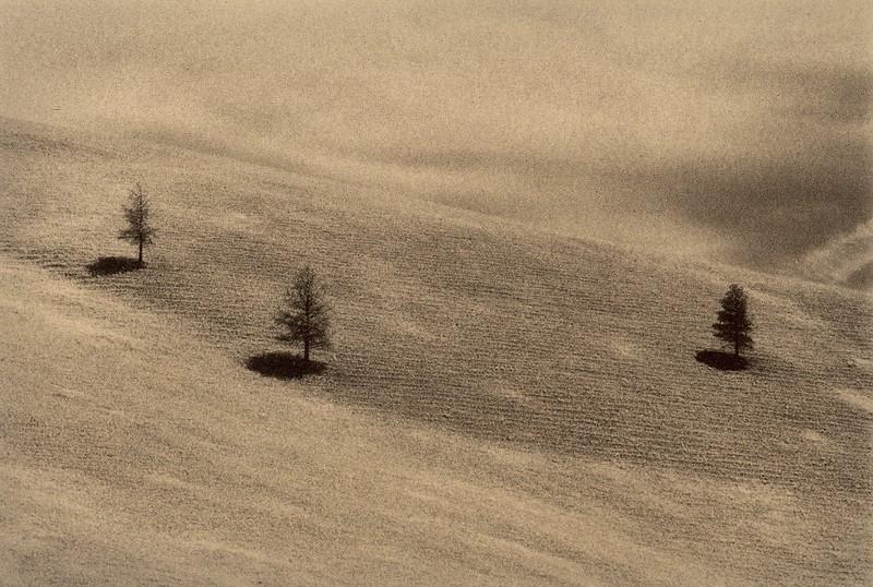 Montana Pines