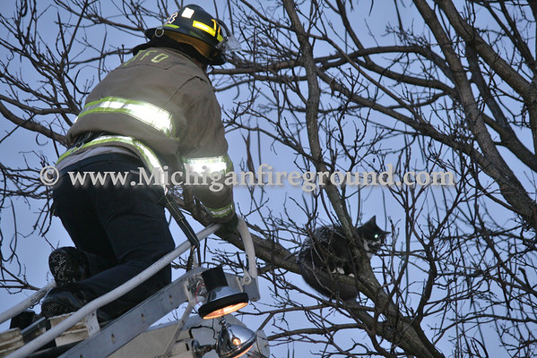 2/16/13 - Onondaga firefighters rescue a cat from a tree