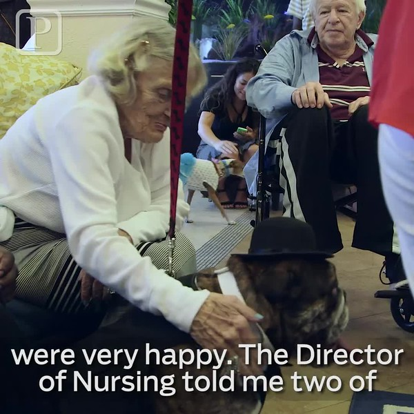 20160826_social_therapy_dogs_jrf.mp4