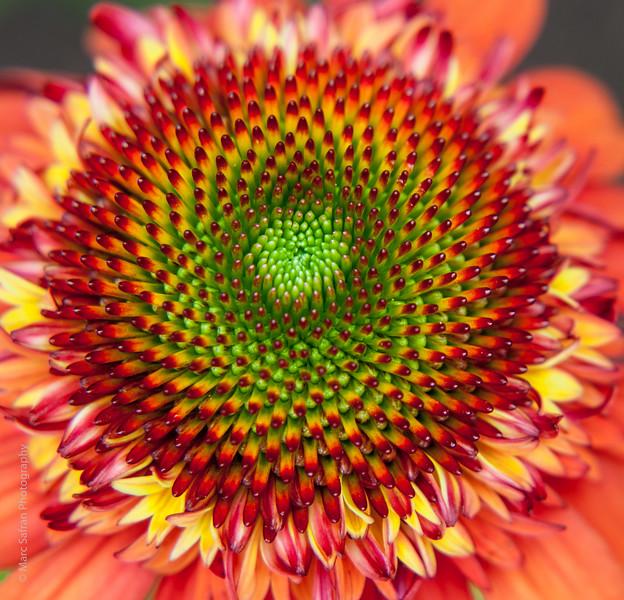 0715_Garden_Macro-108.jpg