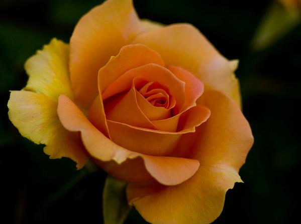 FTCC Rose Garden
