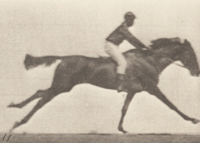 Horse Annie G. galloping with rider