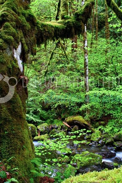 Rainforest River_batch_batch.jpg