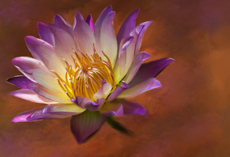 water-lily-with-backg-final.jpg