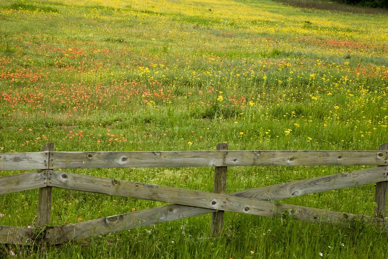 2015_4_3 Texas Wildflowers-7578.jpg