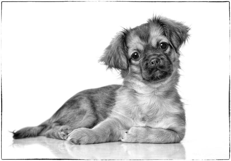 Puppyb&w.jpg