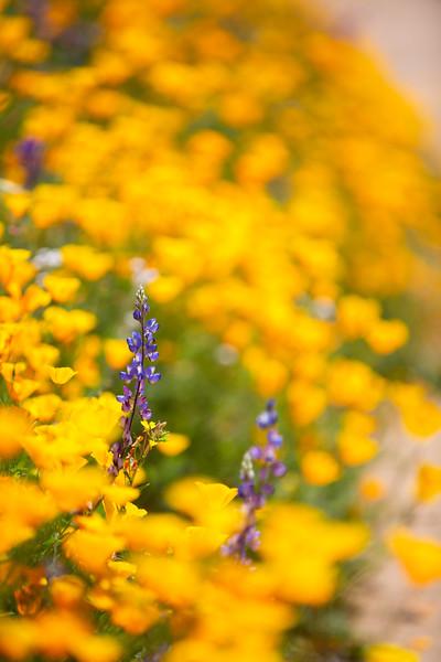 Spring Flowers B-182.jpg