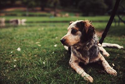 Kristen McGee (Pups)