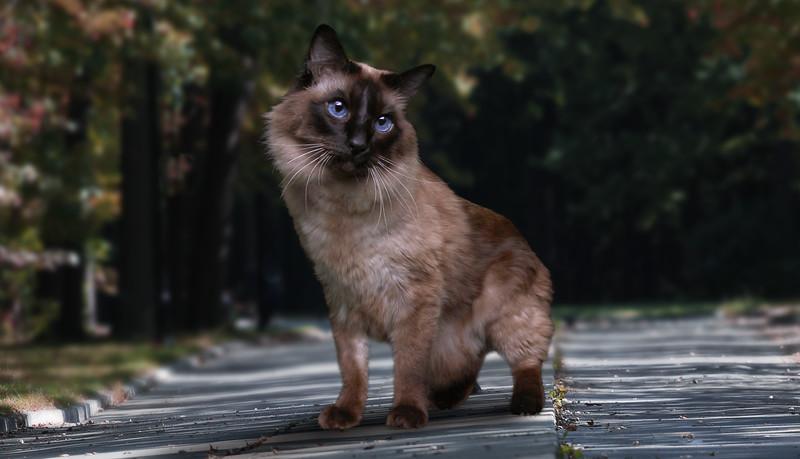 Saule-cat-2.jpg