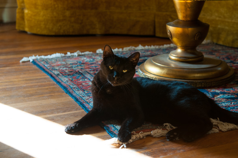 Yes, he's lying on a Purrrsian rug