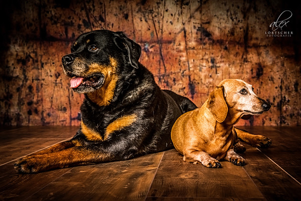 Hundefotos im Fotostudio