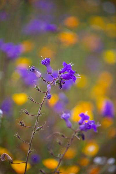 Spring Flowers B-89.jpg