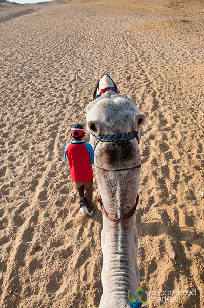 Camel Head and Guide - Giza, Egypt