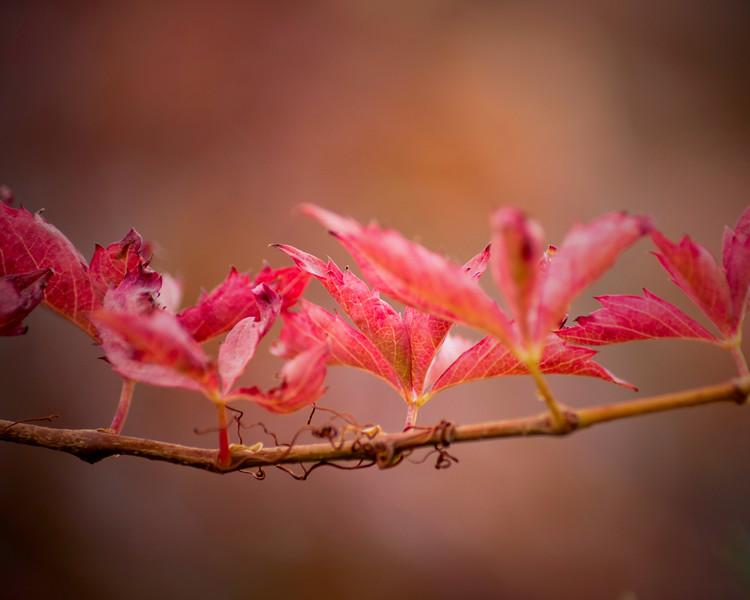Autumn Leaves 5302.jpg