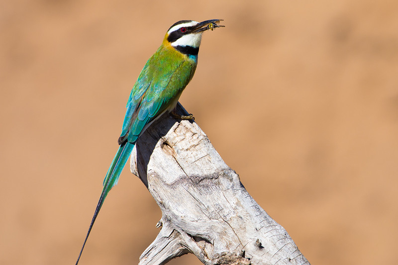 Kenya-0238.jpg