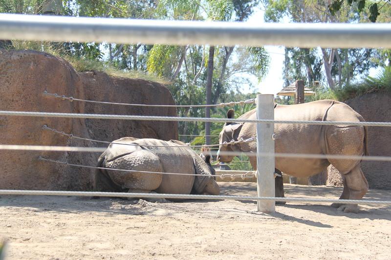 20170807-040 - San Diego Zoo - Rhinoceros.JPG