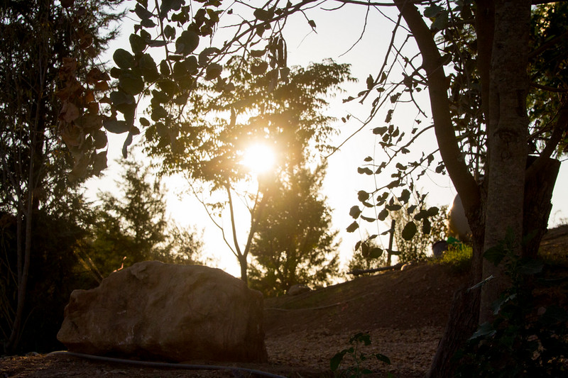 sunday satsang06092015_244.jpg
