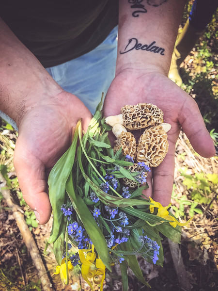 foraged ingredients in hand.jpg