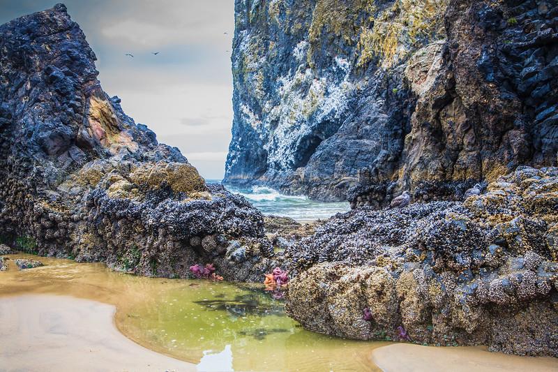Oregon Coast at Cannon Beach